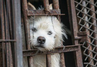 선전시, 중국 내 처음으로 고양이, 개 등의 소비를 금지시키다