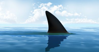 美 상원, 상어 지느러미 판매금지법 통과